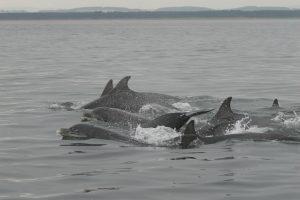 Bottlenose dolphins (Vincent Janik)