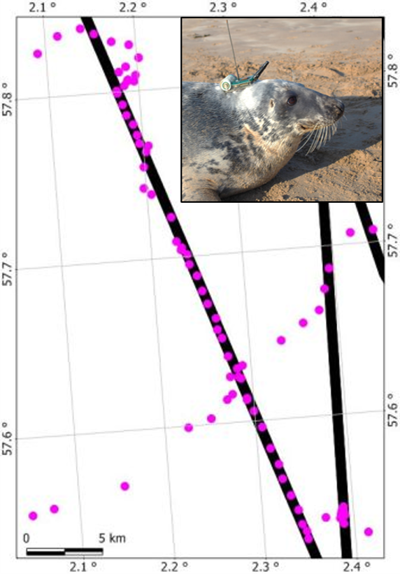 Seal track along a pipeline